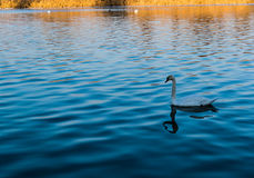 De rivier van de vogelliefde Stock Foto