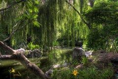 De rivier van de vriendschap Stock Foto
