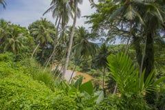 De rivier van de wildernis Stock Fotografie