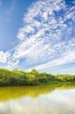 De rivier van de zomer. Stock Fotografie