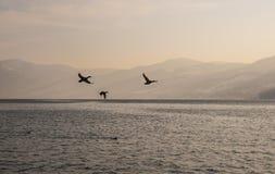 De rivier van Donau met vliegende vogels Royalty-vrije Stock Afbeeldingen