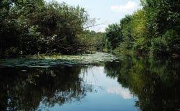 De rivier van het de zomeralluviale gebied met wildernissen van riet en bomen royalty-vrije stock afbeelding
