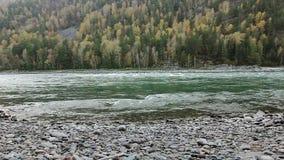 De rivier van Katun van de kustberg in Altai, Rusland stock footage