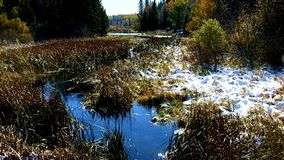 De Rivier van de Mississippi, enkel een kreek die, ongeveer één mijl van de bron in het noorden stromen, Meer Itasca stock videobeelden
