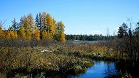 De Rivier van de Mississippi wordt gezien ongeveer 300 voet uit de bron, Meer Itasca, in afstand stock videobeelden