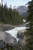 De rivier van Mistaya in rockies Stock Foto