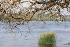 De rivier van Nijl in Murchison valt Nationaal Park, Oeganda royalty-vrije stock foto