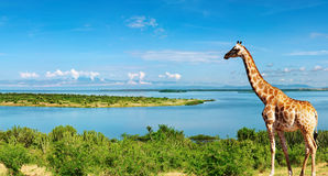 De rivier van Nijl, Oeganda