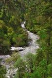 De rivier van Tibet in het bos Stock Foto