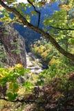 De rivier van Vanchin. De herfst. Royalty-vrije Stock Afbeeldingen