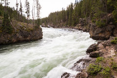 De Rivier van Yellowstone Stock Foto