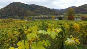 De rivier Wachau Oostenrijk van Donau in de herfst Royalty-vrije Stock Foto's