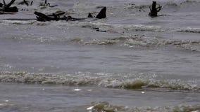 De rivierbank, golven van vuil smeltingswater bespat over winkelhaken stock video