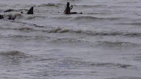 De rivierbank, golven van vuil smeltingswater bespat over winkelhaken stock footage
