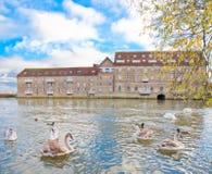 De rivierbank van Huntingdon grote ouse Royalty-vrije Stock Foto's