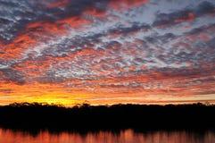De rivierlandschap van Amazonië in Brazilië Royalty-vrije Stock Afbeelding