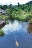De riviermening bij de toevlucht Namkat Yorlapa, Oudomxay, Laos royalty-vrije stock foto