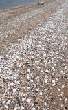 De Rivieroever van Colorado in shells wordt behandeld die stock afbeeldingen