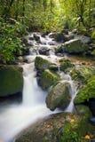 De rivierstroom van Gr Yunque stock foto