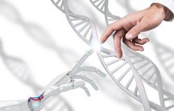 De robotachtige en menselijke ketting van DNA van handaanrakingen het 3d teruggeven Royalty-vrije Stock Fotografie