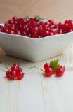 De rode aalbes is in de witte plaat Royalty-vrije Stock Foto's