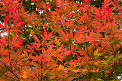 De rode achtergrond van boombladeren stock afbeelding