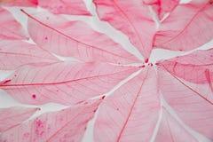 De rode achtergrond van de bladerenstructuur Stock Afbeelding