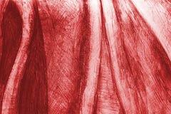De rode achtergrond van de potloodtekening Royalty-vrije Stock Fotografie