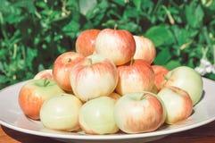 De rode appelen liggen op een plaat Stock Afbeelding