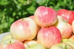 De rode appelen liggen op een plaat een fruit Royalty-vrije Stock Afbeelding