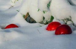 De rode appelen vielen in de witte pluizige sneeuw stock afbeeldingen