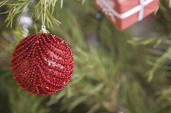 De rode bal van Kerstmis op boom Stock Afbeeldingen