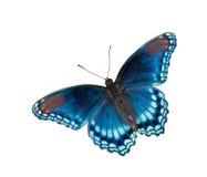 De rode Bevlekte Purpere geïsoleerdeg vlinder van de Admiraal, Stock Foto's