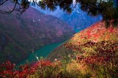 De rode bladeren stock afbeeldingen