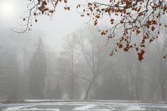 De rode bladeren op boom in het park na eerste sneeuw Royalty-vrije Stock Afbeelding