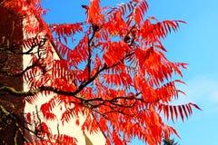 De rode bladeren van de herfst Ondiepe dof Royalty-vrije Stock Afbeeldingen
