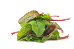 De rode bladeren van de Snijbietensalade Stock Foto's