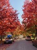 De rode bladerenherfst in Canada stock afbeelding