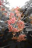 De rode bloem stock afbeelding