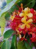 De rode bloem royalty-vrije stock afbeelding
