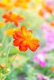 De rode bloem in het park, kleurrijke bloem Stock Afbeelding