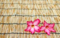 De rode bloem van de impalalelie Stock Afbeeldingen