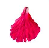 De rode bloemblaadjes van de hibiscusbloem Stock Foto