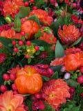 De rode bloemen Stock Foto's
