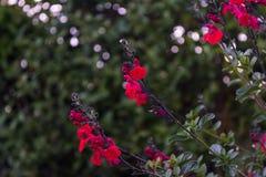 De rode bloemen sluiten omhoog vage verzadiging als achtergrond in nadruk royalty-vrije stock afbeeldingen