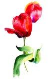 De rode bloemen van Tulpen Stock Afbeeldingen