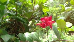 De rode bloemen zijn zonlicht in de tuin Stock Afbeelding