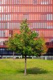 De rode bureaubouw en groene boom Royalty-vrije Stock Fotografie