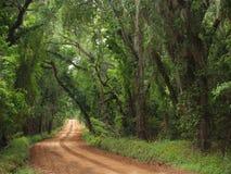 De rode Canopied Landweg van de Klei stock fotografie