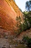 De rode die rotsmuren van Zion Canyon, tijdens worden genomen versmalt stijging bij Royalty-vrije Stock Foto